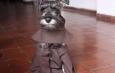 Seekor Anjing yang Fransiskan
